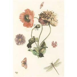 Papavers Vlinders een vlieg en een libelle - 1688-1698 (5010.2013)