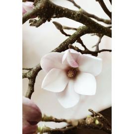 Magnolia Flower (5020.1023)