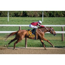 Jockey Paardenrace (5030.1064)