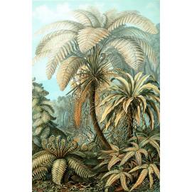 Ernst Haeckel - Filicinae - Jungle (5010.4004)