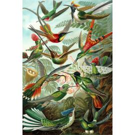Ernst Haeckel - Trochilidae - Hummingbirds (5010.4007)