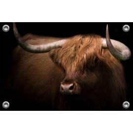 Tuinposter © Karel Ton - Hooglander - Longhorn (6215.0891)
