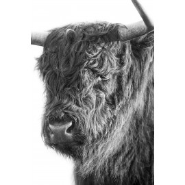 Wanddecoratie © Karel Ton - Hooglander - Longhorn (6216.0801)