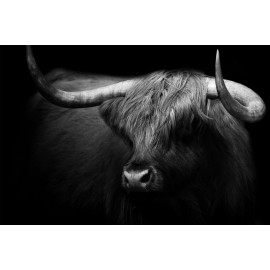 Wanddecoratie © Karel Ton - Hooglander - Longhorn (6216.0891)