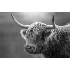 Wanddecoratie © Karel Ton - Hooglander - Longhorn (6216.2695)