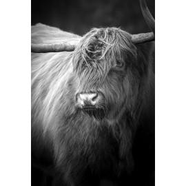Wanddecoratie © Karel Ton - Hooglander - Longhorn (6216.2810)