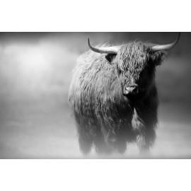Wanddecoratie © Karel Ton - Hooglander - Longhorn (6216.4644)
