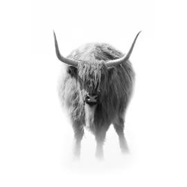 Wanddecoratie © Karel Ton - Hooglander - Longhorn (6216.4779)