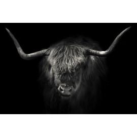 Wanddecoratie © Karel Ton - Hooglander - Longhorn (6216.4787)