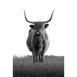 Wanddecoratie © Karel Ton - Hooglander - Longhorn (6216.6117)