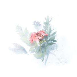Roze bloempje aquarel (5025.1009)