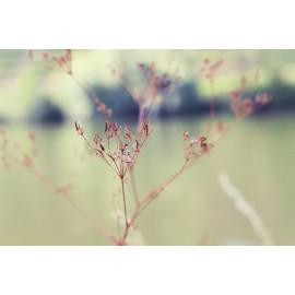 Nature (5025.1031)