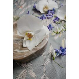Orchidee (5025.1038)