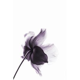 Violet (5025.2022)