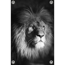 Tuinposter © Ron Entius - Leeuw zwart-wit (6217.1005)