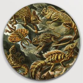 Muurcirkel Ernst Haeckel -...