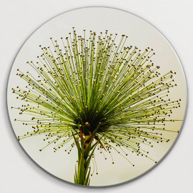 Muurcirkel Green plant...