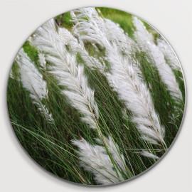 Muurcirkel Gras met witte...