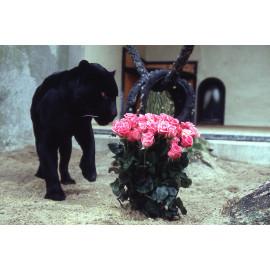 Wanddecoratie © Ron Entius - Panter met bloemen (6217.1026)