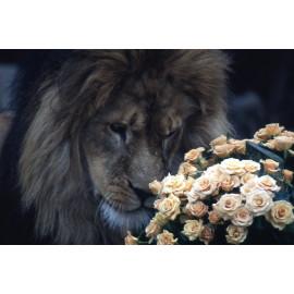 Wanddecoratie © Ron Entius - Leeuw met bloemen (6217.1027)