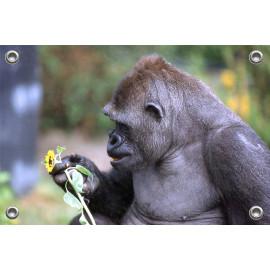 Tuinposter © Ron Entius - Gorilla (6217.1021)