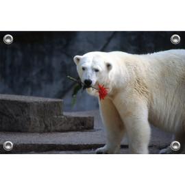 Tuinposter © Ron Entius - ijsbeer met bloem (6217.1025)