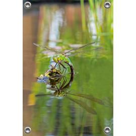 Tuinposter © Dini Liefferink - Grote keizerlibel met spiegelbeeld (6219.1010)