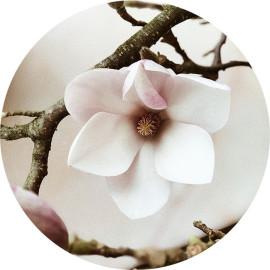 Muurcirkel Magnolia Flower...