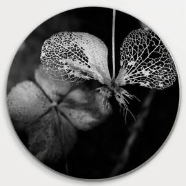 Muurcirkel © Jef Folkerts -...