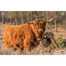 Tuinposter © Dini Liefferink - Hooglander - Longhorn (6219.1018)