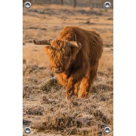 Tuinposter © Dini Liefferink - Hooglander - Longhorn (6219.1020)