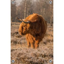 Tuinposter © Dini Liefferink - Hooglander - Longhorn (6219.1021)