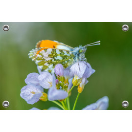 Tuinposter © Ruud Engel Photography - Oranjetipje (6225.1012)