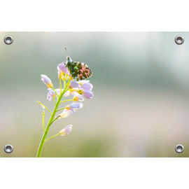 Tuinposter © Ruud Engel Photography - Oranjetipje (6225.1013)