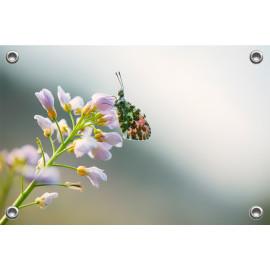 Tuinposter © Ruud Engel Photography - Palendorp Petten (6225.1014)