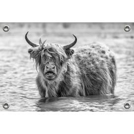 Tuinposter © Ruud Engel Photography - Schotse Hooglander (6225.1020)