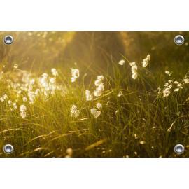 Tuinposter © Ruud Engel Photography - Veenpluis (6225.1024)