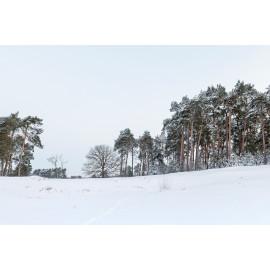 Wanddecoratie © Ruud Engel Photography - Kampina Winter Oisterwijk (6225.1028)