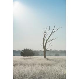 Wanddecoratie © Ruud Engel Photography - Kampina Winter Oisterwijk (6225.1031)
