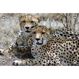 Tuinposter © Bert Huizinga - Cheetah (6213.1004)