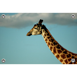 Tuinposter © Bert Huizinga - Giraffe (6213.1005)
