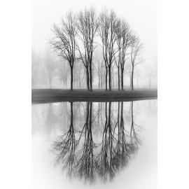 Wanddecoratie © Karel Ton -  Bomen reflectie (6216.1922)