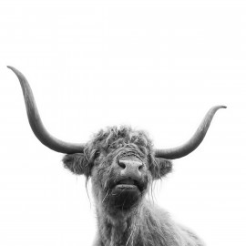 Wanddecoratie © Karel Ton - Hooglander - Longhorn (6216.3112)