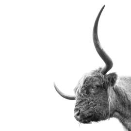 Wanddecoratie © Karel Ton - Hooglander - Longhorn (6216.3122)