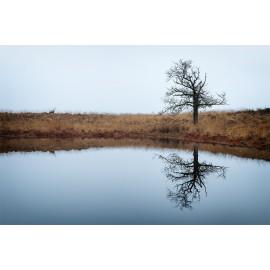 Wanddecoratie © Ruud Engel Photography - Lonely Tree Kampina (6225.1036)