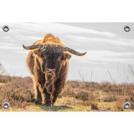 Tuinposter © Dini Liefferink - Schotse Hooglander (6219.1055)