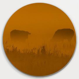 Muurcirkel © René Groenendijk - Koeien in de mist Oudeland (6226.1017)