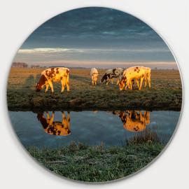 Muurcirkel © René Groenendijk - Spiegeling Grazende Koeien Noorderweg (6226.1024)
