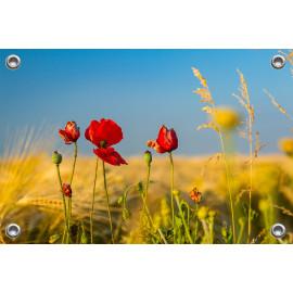 Tuinposter © René Groenendijk - Klaprozen Hoekseweg (6226.1004)