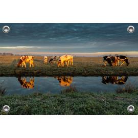 Tuinposter © René Groenendijk - Spiegeling Grazende Koeien Noorderweg (6226.1024)
